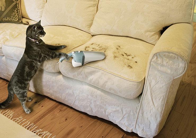 Обучающий маркетинг приведёт клиентов в мебельный магазин кошка пылесосит диван